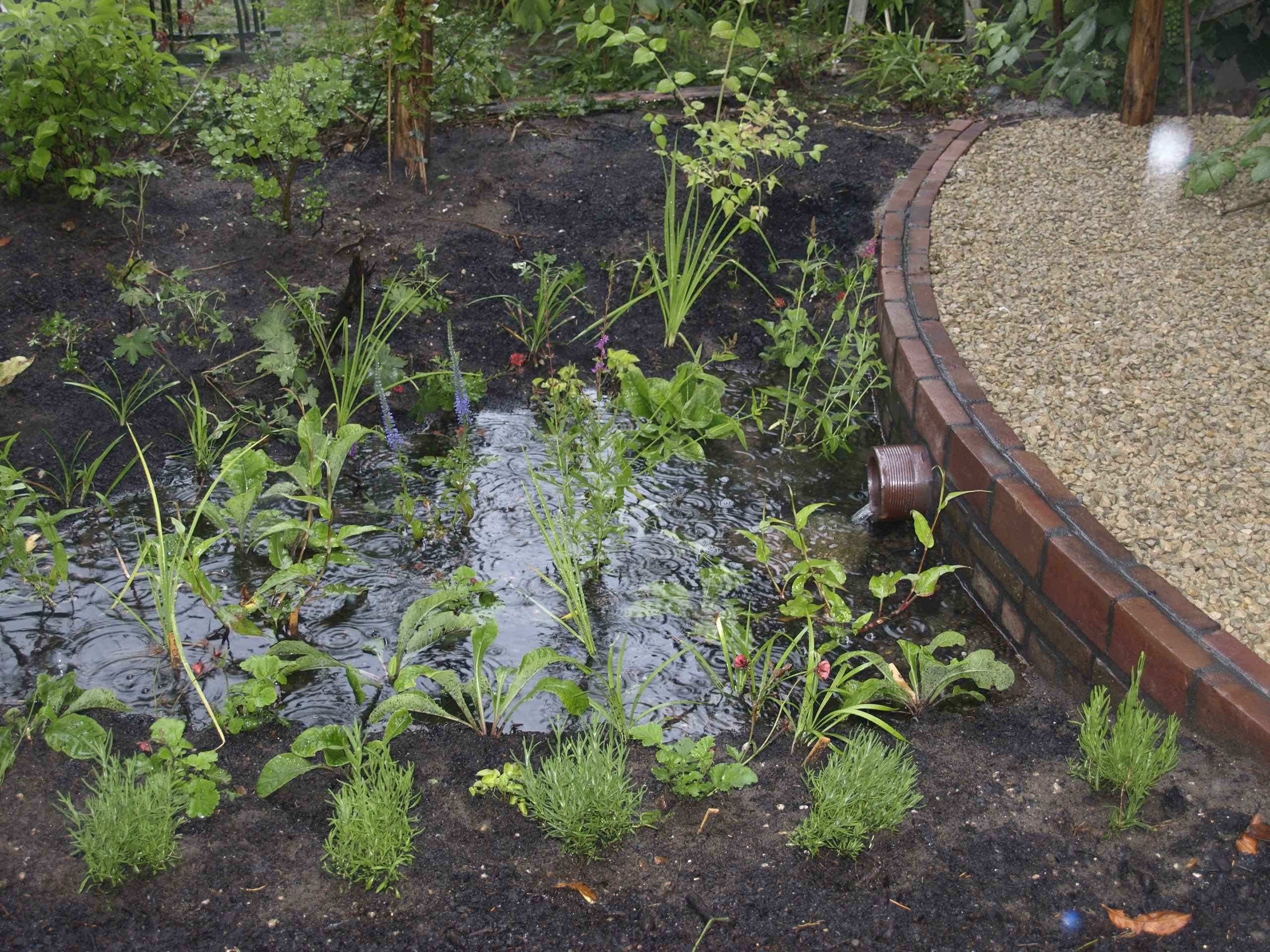 Kenniscaf van operatie steenbreek 39 water in de tuin for Wadi in tuin