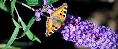 Vlindertuin Papillon