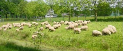 Vereniging Dorpsbelangen Hoogland